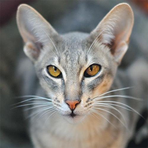 https://www.medicalriskfactorsofdogsandcatsbyrossdclarkdvm.com/wp-content/uploads/2017/09/2.jpg