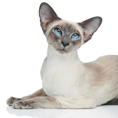 https://www.medicalriskfactorsofdogsandcatsbyrossdclarkdvm.com/wp-content/uploads/2017/09/25.jpg