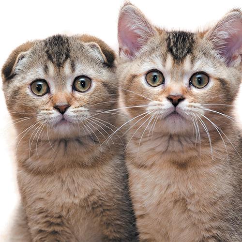 https://www.medicalriskfactorsofdogsandcatsbyrossdclarkdvm.com/wp-content/uploads/2017/09/27.jpg