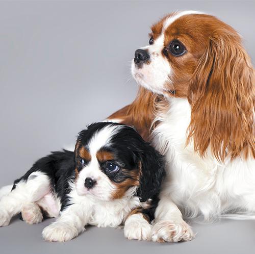 https://www.medicalriskfactorsofdogsandcatsbyrossdclarkdvm.com/wp-content/uploads/2017/09/32.jpg