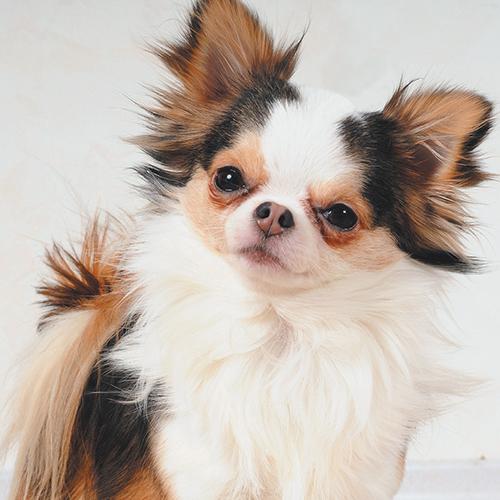 https://www.medicalriskfactorsofdogsandcatsbyrossdclarkdvm.com/wp-content/uploads/2017/09/33.jpg