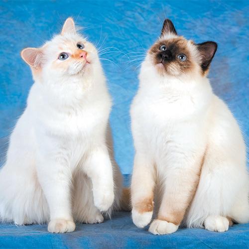 https://www.medicalriskfactorsofdogsandcatsbyrossdclarkdvm.com/wp-content/uploads/2017/09/4.jpg